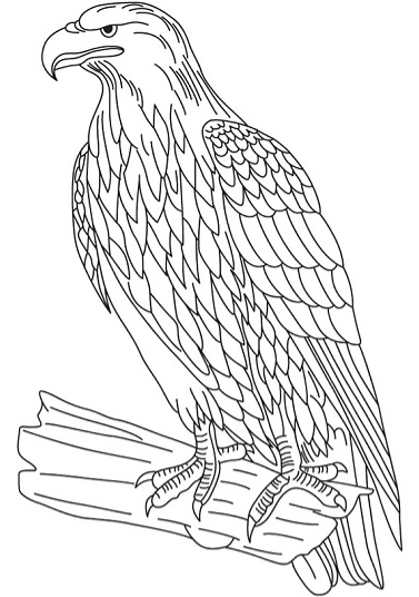 Coloriage Aigle D'or