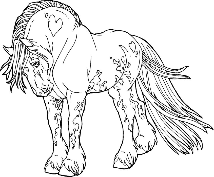 Coloriage Beau Cheval Mustang