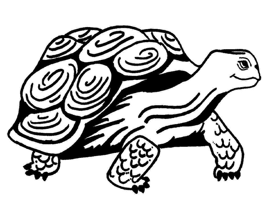 Coloriage Vieille Tortue