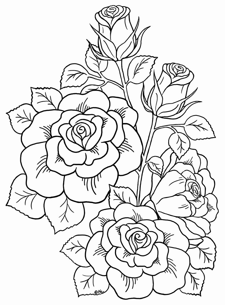Coloriage Roses Hautaines